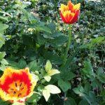 Цветочный гороскоп Лев: растения, цветы и деревья знака Льва