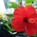Цветочный гороскоп Овен: растения, цветы и деревья знака Овна