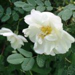 Цветочный гороскоп Рак: растения, цветы и деревья знака Рака