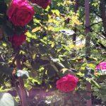 Цветочный гороскоп Телец: растения, цветы и деревья знака Тельца