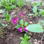 Цветочный гороскоп Весы: растения, цветы и деревья знака Весов