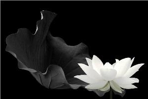 белые цветы приснились