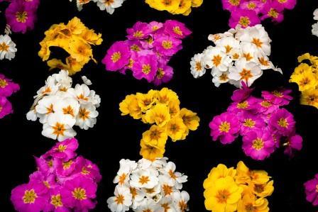 приснились живые цветы