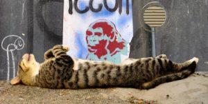 Сонник К чему снятся кошки - Видеть во сне кошку