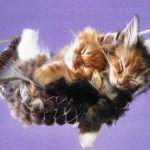 Кролик (Кот) и Кролик - совместимость по году рождения, мужчина и женщина