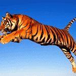 Тигр и Дракон - совместимость по году рождения, мужчина и женщина