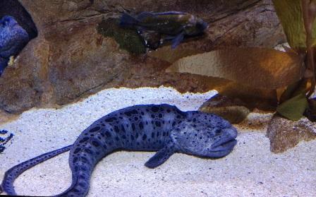 сон аквариум с рыбками