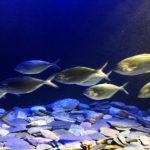 К чему снится аквариум с рыбками, значение сна