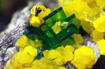 Торбернит (зеленый) и фосфуранилит (желтый)