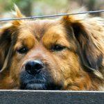 Год Быка для Собаки – китайский гороскоп на 2021 год