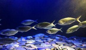 Миниатюра к статье К чему снится аквариум с рыбками, значение сна