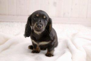 Бык и Собака - совместимость по году рождения, мужчина и женщина