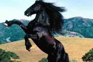 Дракон и Лошадь - совместимость по году рождения, мужчина и женщина