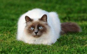 Гороскоп на совместимость собака она и кот он