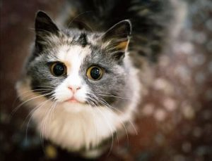 Женщина кот-мужчина кот совместимость в любви