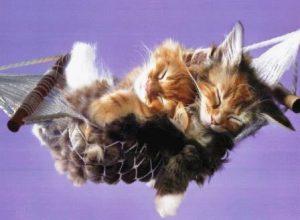 Совместимость дракон и кот кролик совместимость