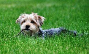 Крыса и Собака - совместимость по году рождения, мужчина и женщина