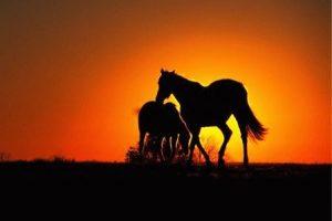 Лошадь и Лошадь - совместимость по году рождения, мужчина и женщина