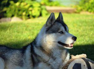 Лошадь и Собака - совместимость по году рождения, мужчина и женщина