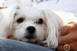 Обезьяна и Собака - совместимость по году рождения, мужчина и женщина