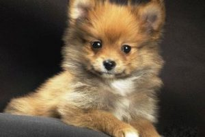 Петух и Собака - совместимость по году рождения, мужчина и женщина