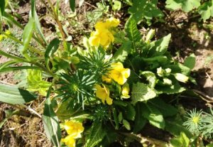 Цветочный гороскоп Близнецы: растения, цветы и деревья знака Близнецов