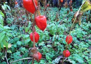 Цветочный гороскоп Козерог: растения, цветы и деревья знака Козерога