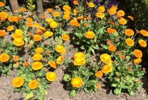 Цветочный гороскоп Скорпион: растения, цветы и деревья знака Скорпиона