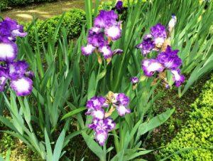 Цветочный гороскоп Стрелец: растения, цветы и деревья знака Стрельца