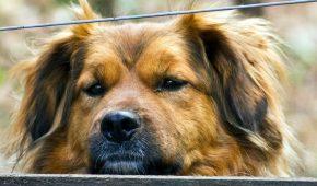 Миниатюра к статье Год Быка для Собаки – китайский гороскоп на 2021 год