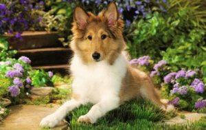 Собака и Собака - совместимость по году рождения, мужчина и женщина