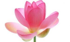К чему снятся цветы во сне: собирать, покупать, дарить, сажать