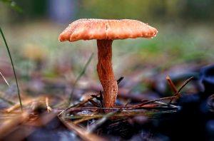 К чему снятся грибы во сне: собирать, есть, готовить