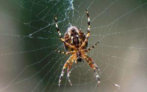 К чему снятся пауки и тараканы, большие и маленькие