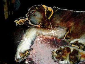 Сонник К чему снится собака - видеть собаку во сне